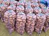 Продам молодой картофель оптом в Краснодарском крае