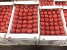 Продаем помидоры оптом в краснодарском крае,помидоры оптом краснодар