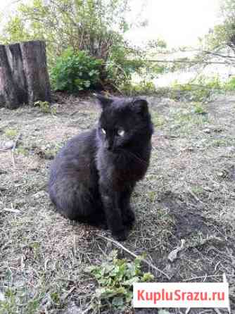 Красивый кот в добрые руки Абакан