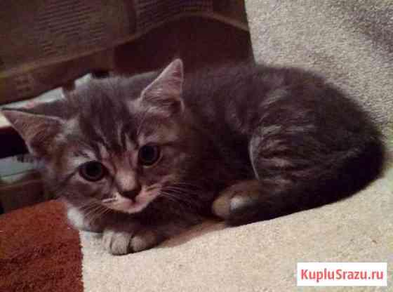 Котёнок девочка Чебоксары