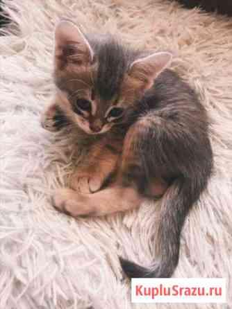 Котёнок Москва