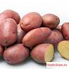 Картофель местный
