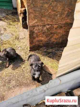 Хвостики ищут дом Магнитогорск