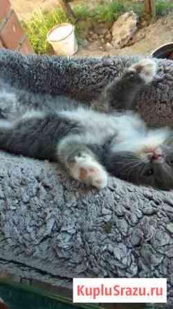 Продам котят в отличные руки Верхний Мамон