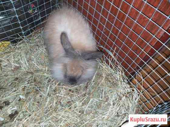 Декоративный кролик Иланский