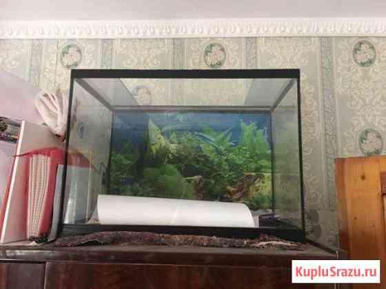 Аквариум Севастополь