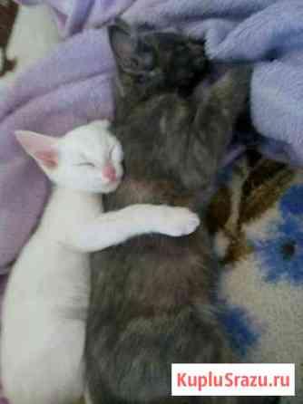 Отдам котят в хорошие руки Саяногорск