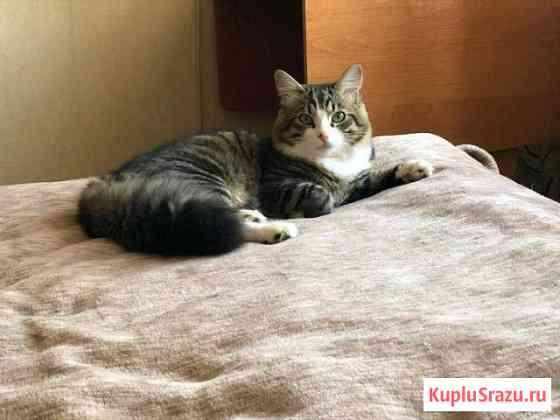 Котик Магадан