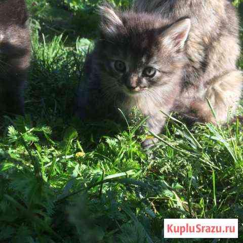 Кошечки ищут свой дом Ярославль