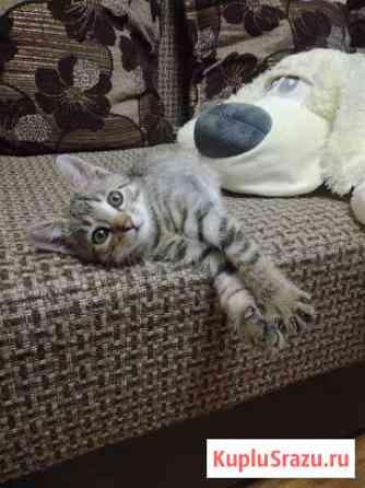 Маленькие котята Биробиджан