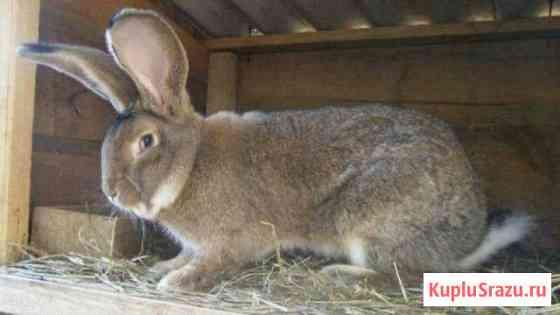 Кролики на мясо и разведения Мещерино