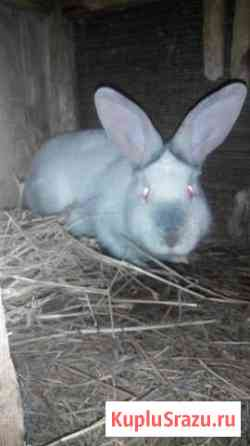 Кролики и мясо Мещерино