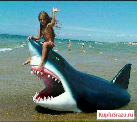 Акула Анапа