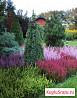 Растения для вашего сада