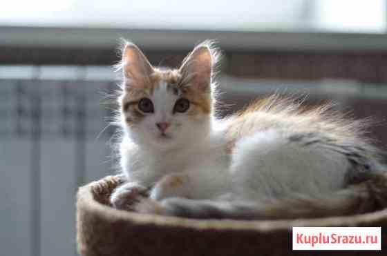 Кошечка Биробиджан
