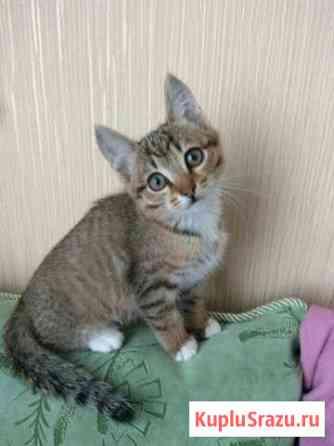 Отдам котенка Томск