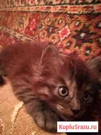 Котёнок Муром