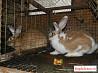 Кролики разные породы и клетки для кроликов