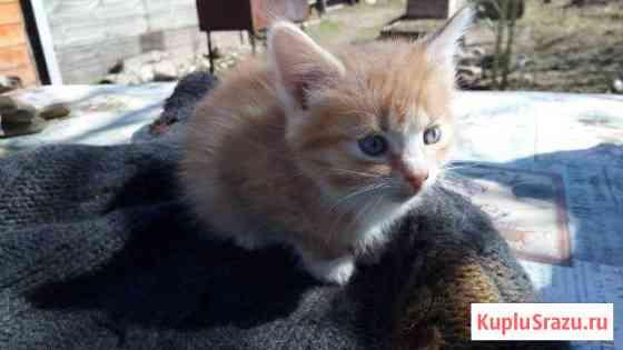 Котят от кошки мышеловки отдаем Черноголовка