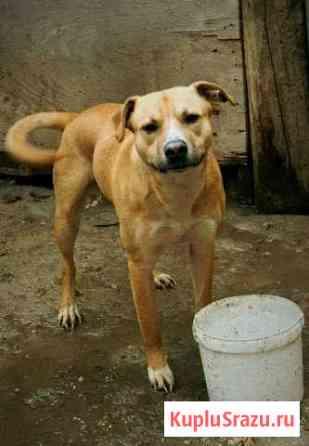Замечательный друг собака для доброго человека Железнодорожный