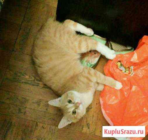 Солнечный котёнок в добрые руки Железнодорожный