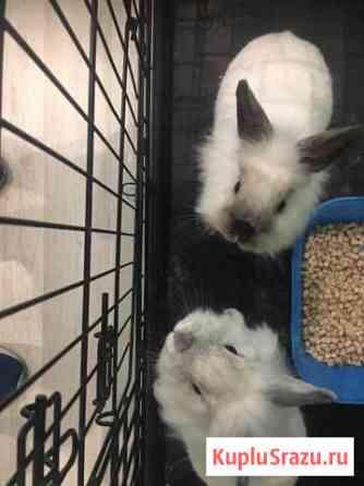 Декоративные кролики Элиста