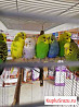 Продаю волнистых попугайчиков