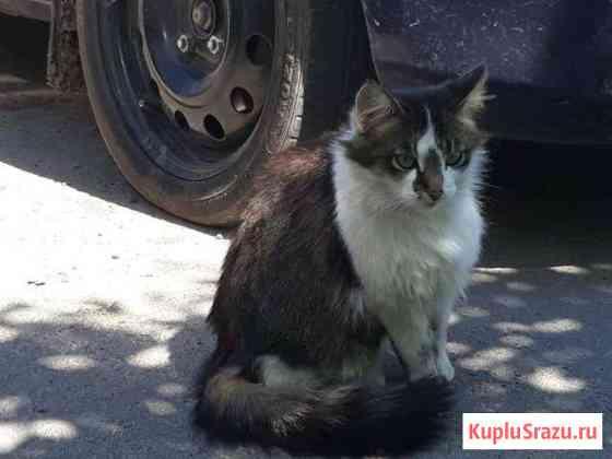 Стерилизованная кошка ищет дом Чаплыгин
