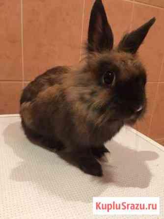 Кролик Ставрополь