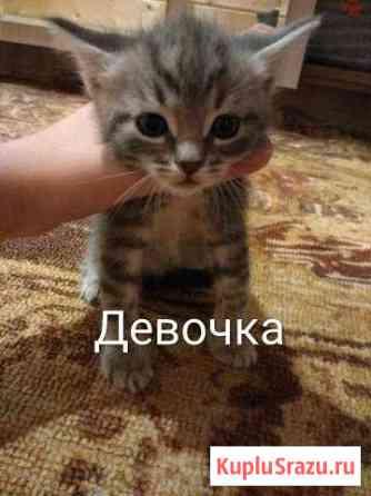 Котята в добрые руки Ижевск