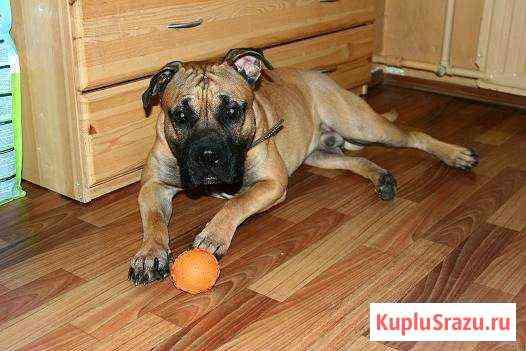 Передержка животных в домашних условиях Самара