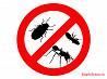 Уничтожение насекомых, тараканы, блохи, клопы
