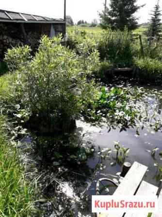 Чистка пруда от травы и цветков Богородское