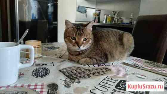 Передержка кошек и собак Железнодорожный