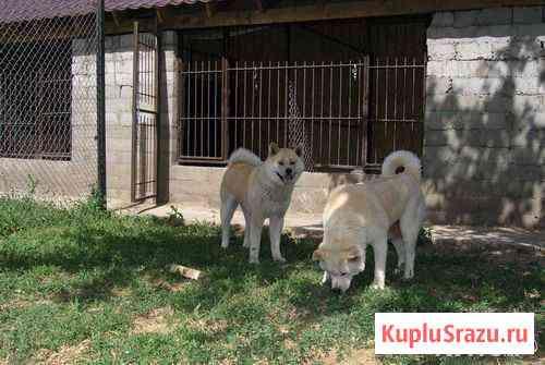 Передержка домашних животных. Зоогостиница Самара