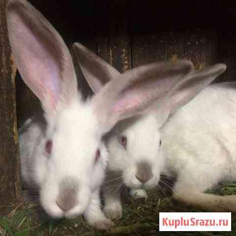 Кролики в наро-фоминском районе Верея
