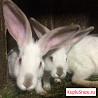 Кролики в наро-фоминском районе