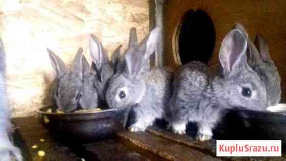 Кролики Верея