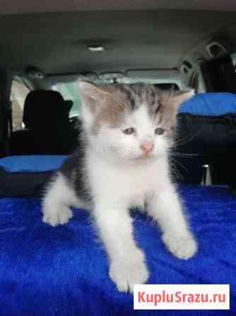 Отдам котенка Кропоткин