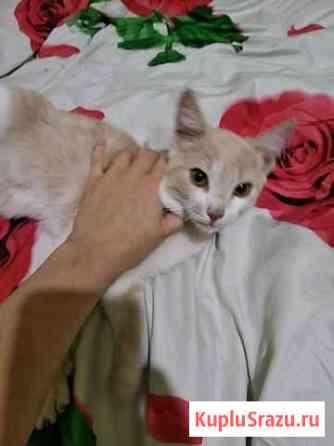 Найден котенок Екатеринбург