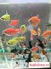 Рыбки для пруда или Аквариума