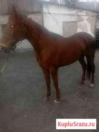 Лошадь Липецк