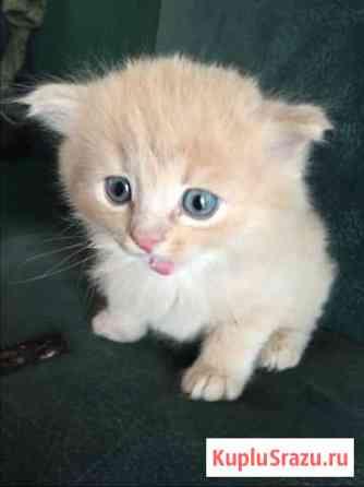 Котёнок 1 Калязин