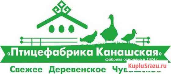 Электрик-Инженер автоматизированных систем (кипиа) Канаш