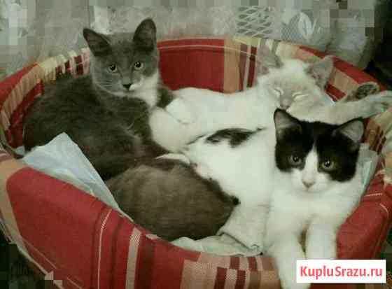 Яркий черно-белый котик в добрые руки Железнодорожный