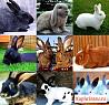 Продам кроликов мясных пород от 45 дней и старше