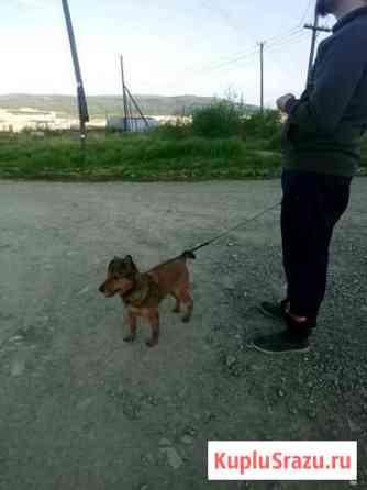 Собака Магадан