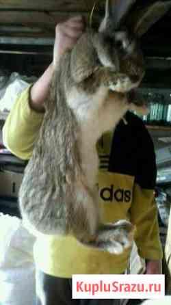 Кролик Горно-Алтайск