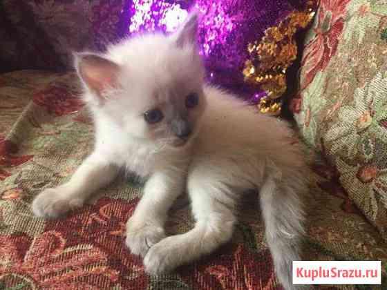 Котята в добрые руки Стерлитамак