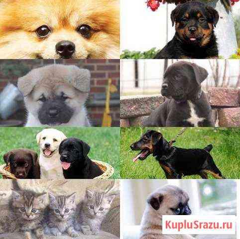 Собаки Назрань